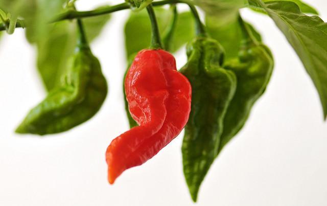 benefici del peperoncino