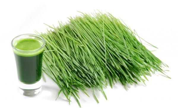 erba di grano