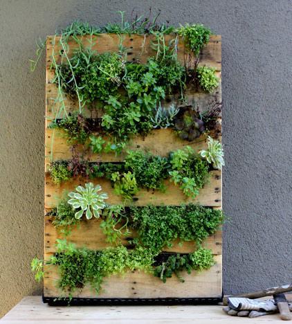 13 vantaggi del coltivare giardini verticali - Ambiente Bio