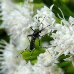 5 piante da coltivare in giardino che tengono lontane le zanzare