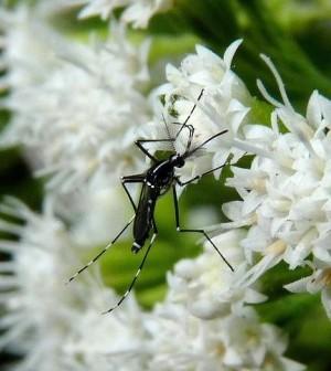 5 piante da coltivare in giardino che tengono lontane le zanzare ambiente bio - Contro le zanzare in giardino ...