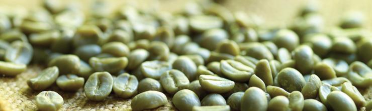 Green Coffee pic 3