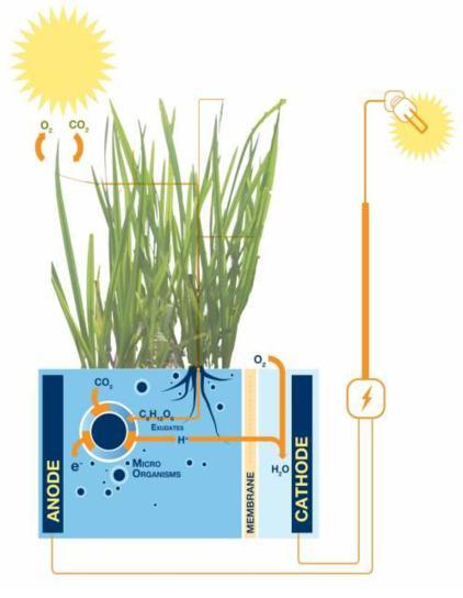 Plant-E: come funziona