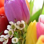 Come conservare ed essiccare i fiori
