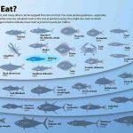 Mercurio nel pesce: quali i rischi e gli esemplari che ne contengono di più