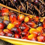 Acquisti consapevoli: la lista dei prodotti senza olio di palma