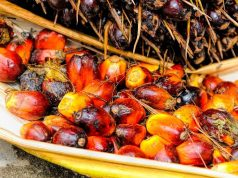 Lista dei prodotti senza olio di palma