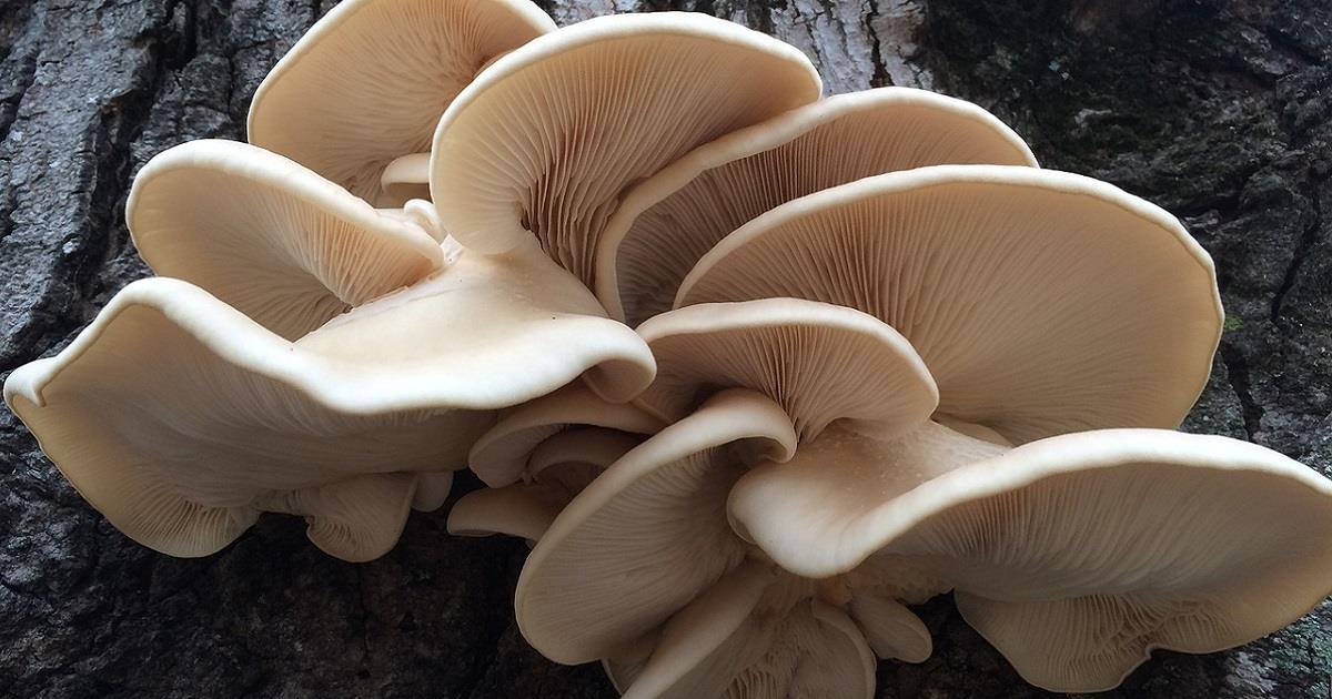 fungaia spesa di stagione