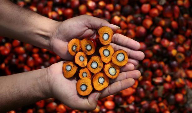 Prodotti senza olio di palma