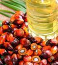 olio di palma_prodotti