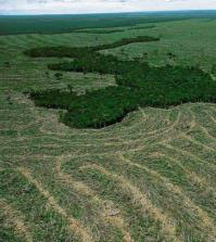deforestazione_amazzonia_brasile