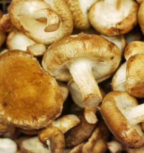 aumentare le difese immunitarie funghi shiitake