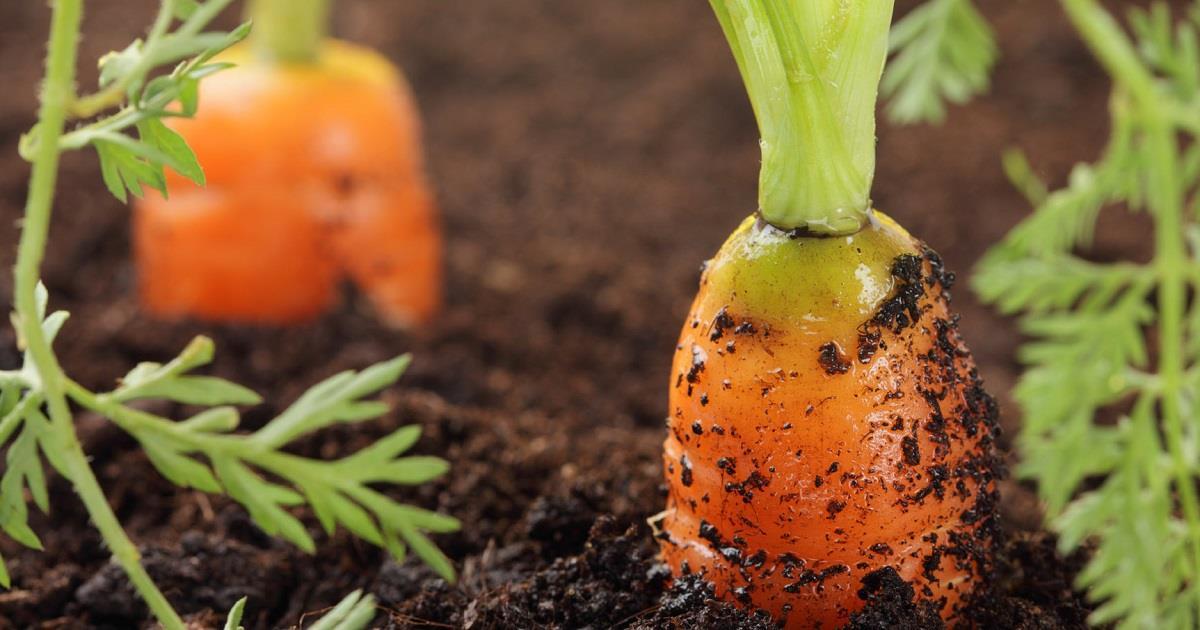 L'agricoltura biologica rende di più?