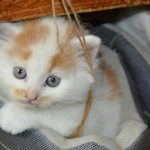 Riconoscere l'avvelenamento del gatto e come salvarlo