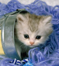 Cucciolo-gatto-kittens-1024x768