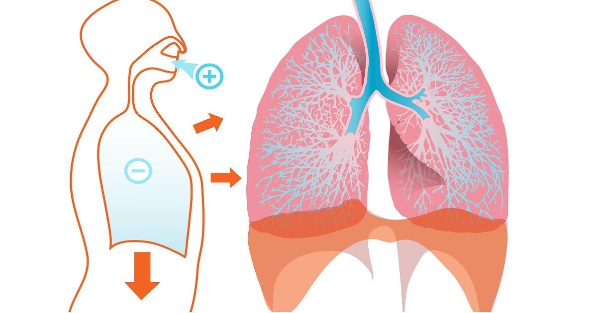 Prendersi cura dei polmoni in maniera naturale