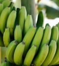 banane_biomassa