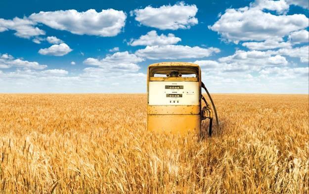 coltivazione biodiesel