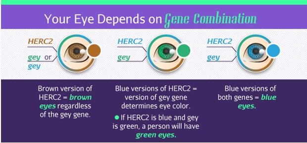 Foto: infografica http://www.healthyandnaturalworld.com/what-does-your-eye-color-reveal-about-you/