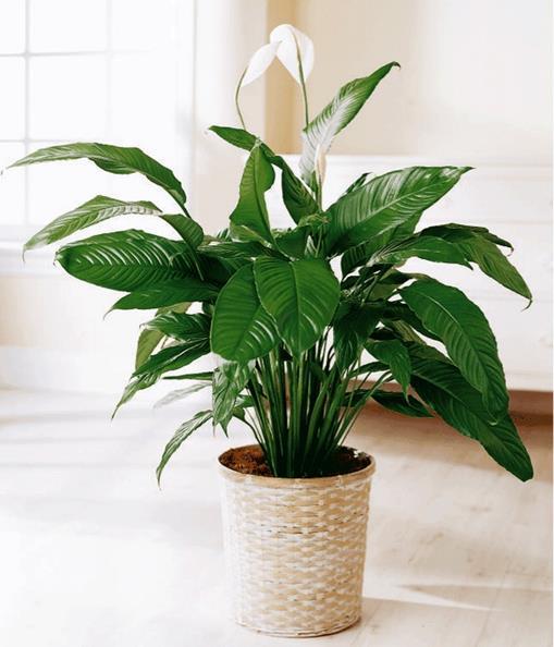 5 modi in cui le piante d appartamento aiutano la nostra for Solo piante