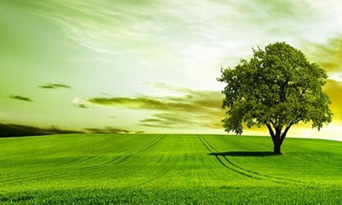salvaguardia ambiente