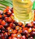 olio di palma nocivo