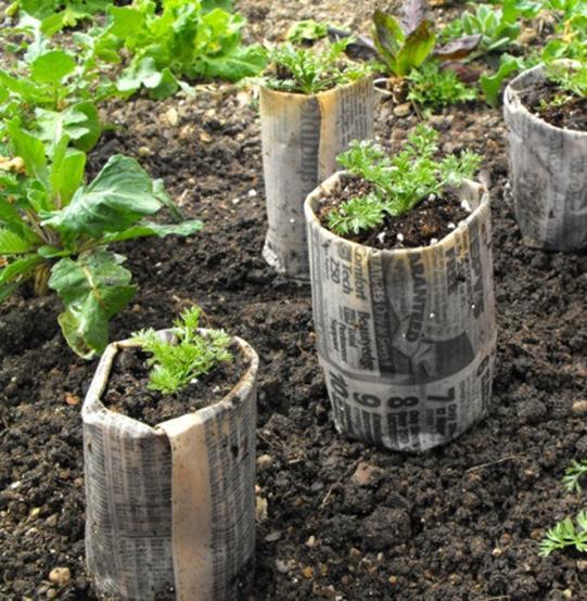Come creare un semenzaio fai da te con materiali riciclati for Orto pensile fai da te