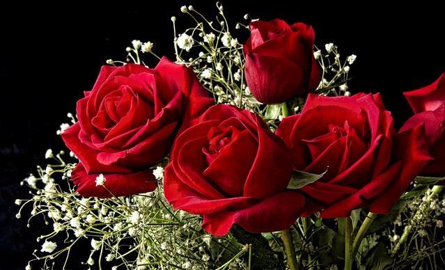 significato dei fiori_rose