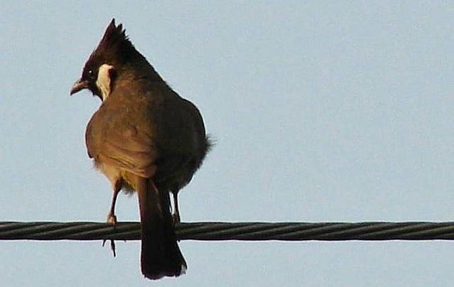cavi elettrici_uccelli