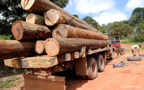 Carregamento de madeira em Itinga do Maranhão. Caminhão sem placa levanta suspeitas de carga ilegal. (©Greenpeace/Ismar Ingber/Tyba)