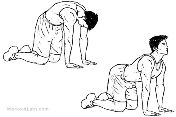 http://workoutlabs.com/wp-content/uploads/watermarked/Cat_Back_Stretches.png