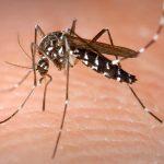 5 rimedi naturali contro le punture di insetti