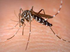 punture di insetti rimedi naturali