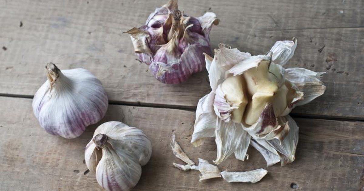 perchè aglio previene il cancro