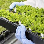 Biotecnologie sostenibili: stanziati 21 milioni per la ricerca in Itala