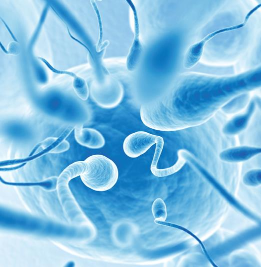 Rischio fertilità