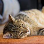 Gatto stressato? Ecco come intervenire coi rimedi naturali