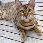 Sterilizzazione del gatto: si o no? Alcune informazioni in più per fare chiarezza