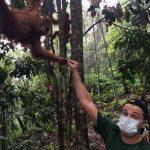 Olio di palma: Leonardo DiCaprio rischia l'espulsione dall'Indonesia per le sue proteste
