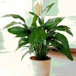 50 piante che favoriscono l'energia positiva