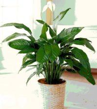 Come riconoscere lo stato di salute delle piante dalle foglie ambiente bio - Compost casalingo ...