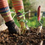 Garden Therapy: quando stress e tristezza si combattono in giardino