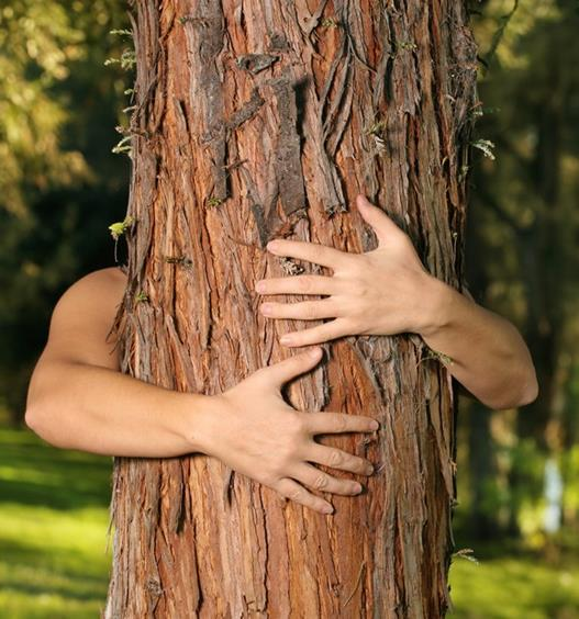 14 alberi da abbracciare per guarire corpo e mente | Ambiente Bio
