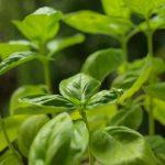 6 erbe aromatiche facili da coltivare a partire dal seme