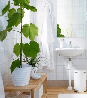 Piante da appartamento: quali tenere in bagno - Ambiente Bio