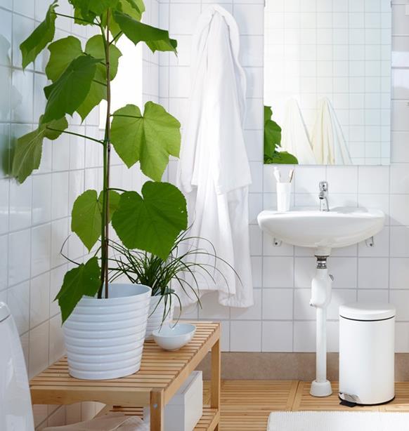 Piante da appartamento quali tenere in bagno ambiente bio - Piante da bagno ...