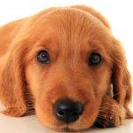 Rianimazione cardiopolmonare: come salvare la vita al vostro cane