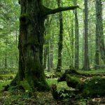 Deforestazione di Białowieża in Polonia: l'UE vuole vederci chiaro