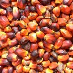 Olio di palma: contiene contaminanti tossici