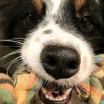 2 ingredienti naturali per pulire i denti dei vostri cani